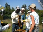 Collecting bees for sugar test