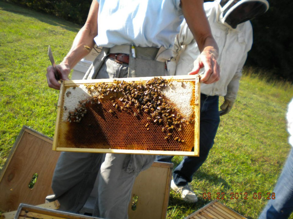 Typical bee foundation layout